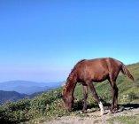zekari_koń