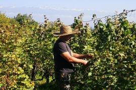 Kakhetis Guli Winery